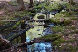 Range Pond Feeder Stream in Town Forest